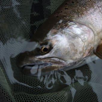 久し振りの釣りで 碓氷川での自己記録更新