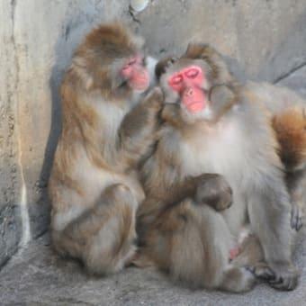 一挙公開 札幌円山動物園