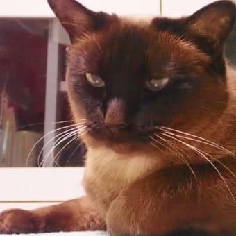 猫はなぜ人を平気で踏んづけてゆくのか?