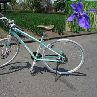 鞍岳のレットさんと、自転車のパンクとサイクリング風景と猫さん。