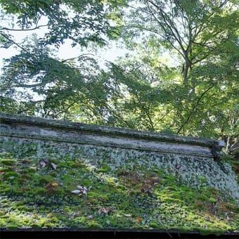 下鴨神社 糺ノ森 その3