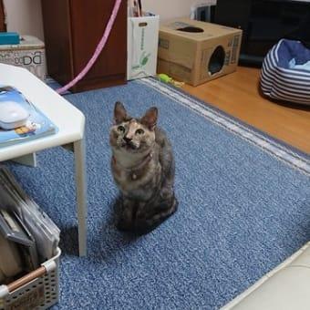 トラちゃん!ミコちゃん何を見ているのかな~。。。(^^♪