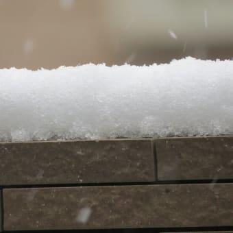 「オオ!ユキ」から大雪へ 11月の雪 宮代町の散歩道