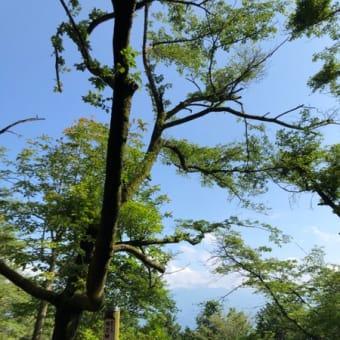 高尾山から景信山を経て陣馬山を越えて熊を見たお話し