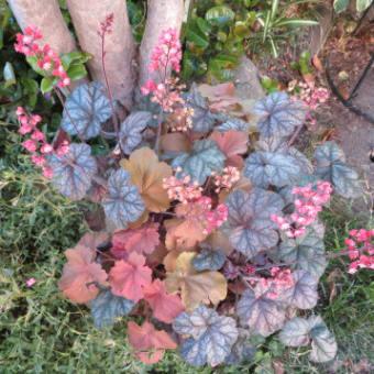 2020年5月11日 花壇の花たち:まとめ