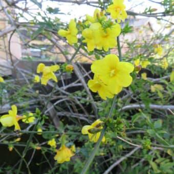 1月の忘れ物(花)