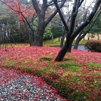 モミジの落ち葉が、ピンクの絨毯