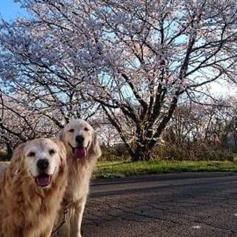 青空のお花見散歩♪