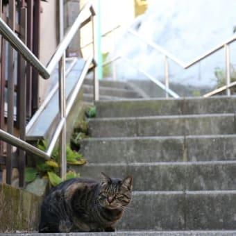江ノ島のにゃん(3)