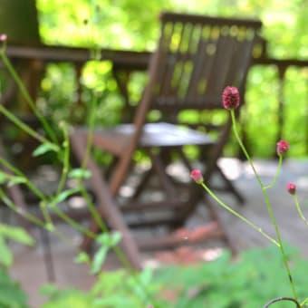 ワレモコウ風に揺れ、午後の森はお盆休みの賑やかさに走り回る。