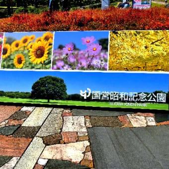 昭和記念公園のコスモス散策、(10/20) コスモス畑および花壇の花達。