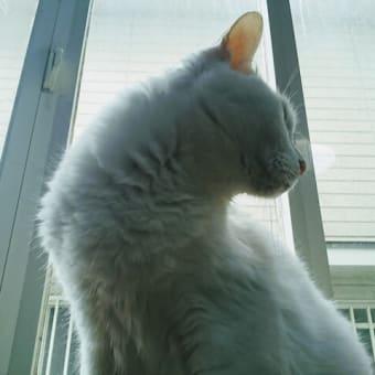 出窓にて♪みニャ様へご報告ニャう。