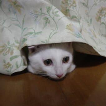 せっかく隠れてるのに