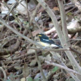 幸せの黄色い鳥と青い虫~岩間山正法寺(後編)