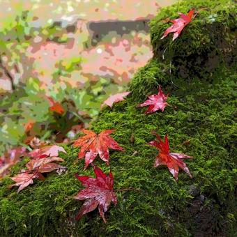 鶏足寺の紅葉 その4