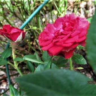 バラ;ハナテマリ;アジサイ造花