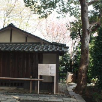 緑の桜花「御衣黄」