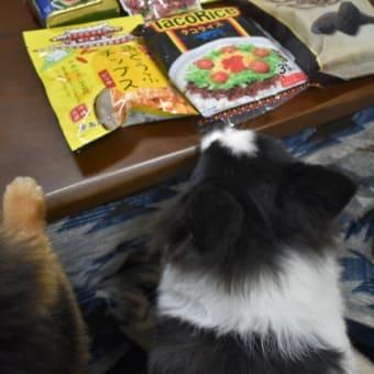ぷしゅ猫さんありがとう♪