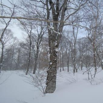 2013 黒姫BCスキー 2