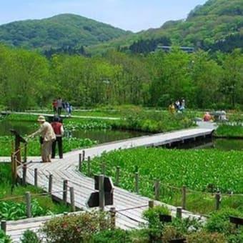 春の湿原でお散歩はいかが?|じねんじょ蕎麦 箱根 九十九