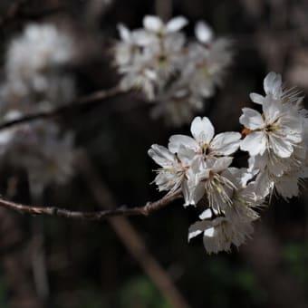 風は春~~♪