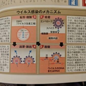 ウイルス感染のメカニズム