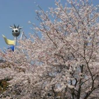 メモリアルの桜が満開になる。