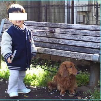 愛犬アッシュ9歳の誕生日☆