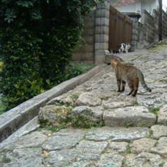 石畳のネコ