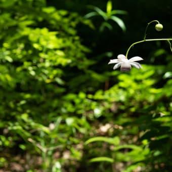 夏の森林公園から
