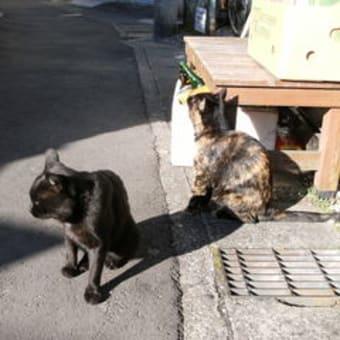 2010年も猫バカ一直線