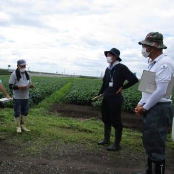 大豆種子生産ほ場の第1期ほ場審査を行いました