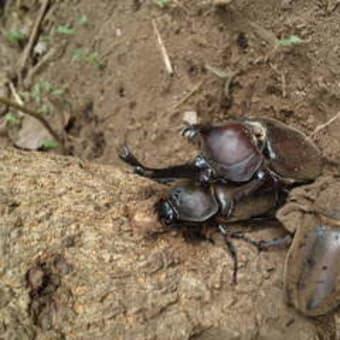 里ちび報告『8月・夏の森の昆虫さがし&流しそうめん』