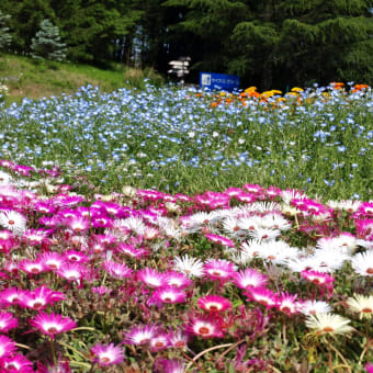 2013/05 シライトソウ ~武蔵丘陵森林公園~