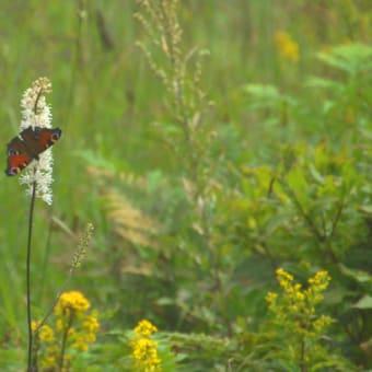 コーヒーと川と森の涼風と蝶が舞う午後の森ウッドデッキ。