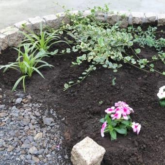 新しい庭作り 🌿🌸🌿 2020年7月24日