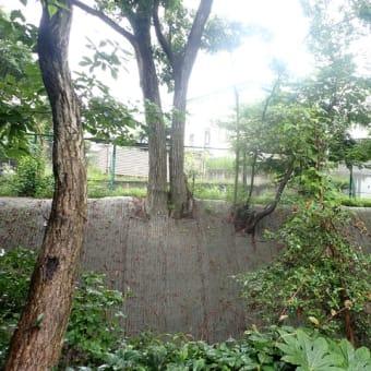 2021.6.19 井の頭 樹木調査