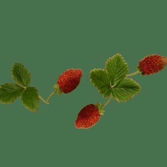 6 / 7 めぐり~庭の実 と 肩を冷やさないケープ作り