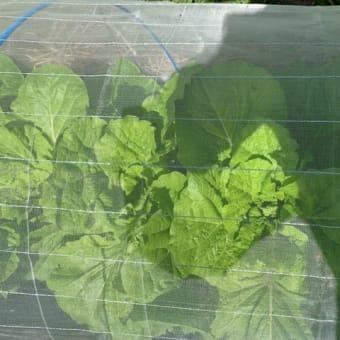 10月10日(木)~サツマイモと黒豆の収穫~