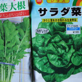 野菜の種、植えました。