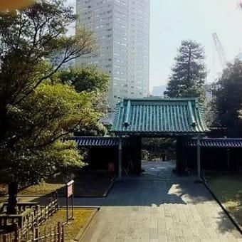 桜 探鳩 - 御茶ノ水 湯島聖堂の桜 今季はじめての桜観