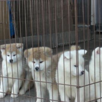 仔犬が11匹産まれました(●^o^●)♪
