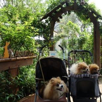 あじさい公園&カフェでランチ。