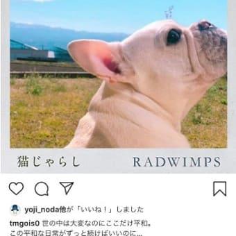 **神楽ちゃん特集!**