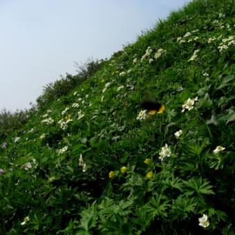 植物エネルギー ~73 話 夢にまで見た暑寒別岳  ~
