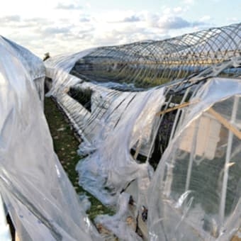 印南地内で竜巻のような突風  農業用施設や農作物に被害甚大 〈2020年11月22日〉
