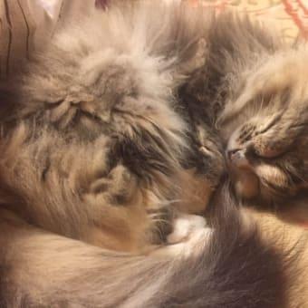 眠る、眠る、、ひたすら眠る