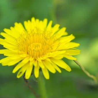 5月の雑草倶楽部、中目黒公園で撮り卸の花たちでございます。