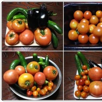 最後のブログ/頂いた&収穫した野菜と朝顔の写真