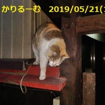 スポンジボブ スクエアパンツ ザ・ムービー【映画別英単語】